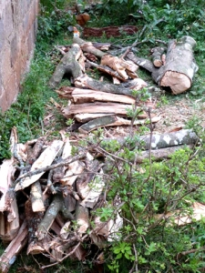 Pile of cut trees Ngong Forest