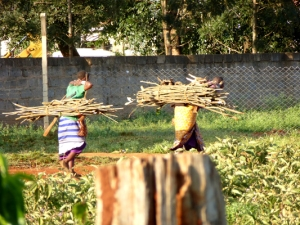 Women carrying wood, trees chopped down in Ngong Forest
