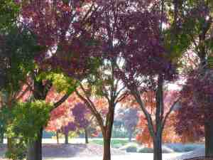 Colorful Trees National Library Canberra Australia