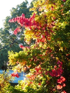 Multicolor Fall, Canberra, Australia