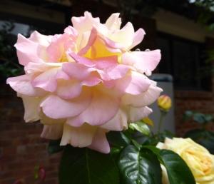Rose Pink 916